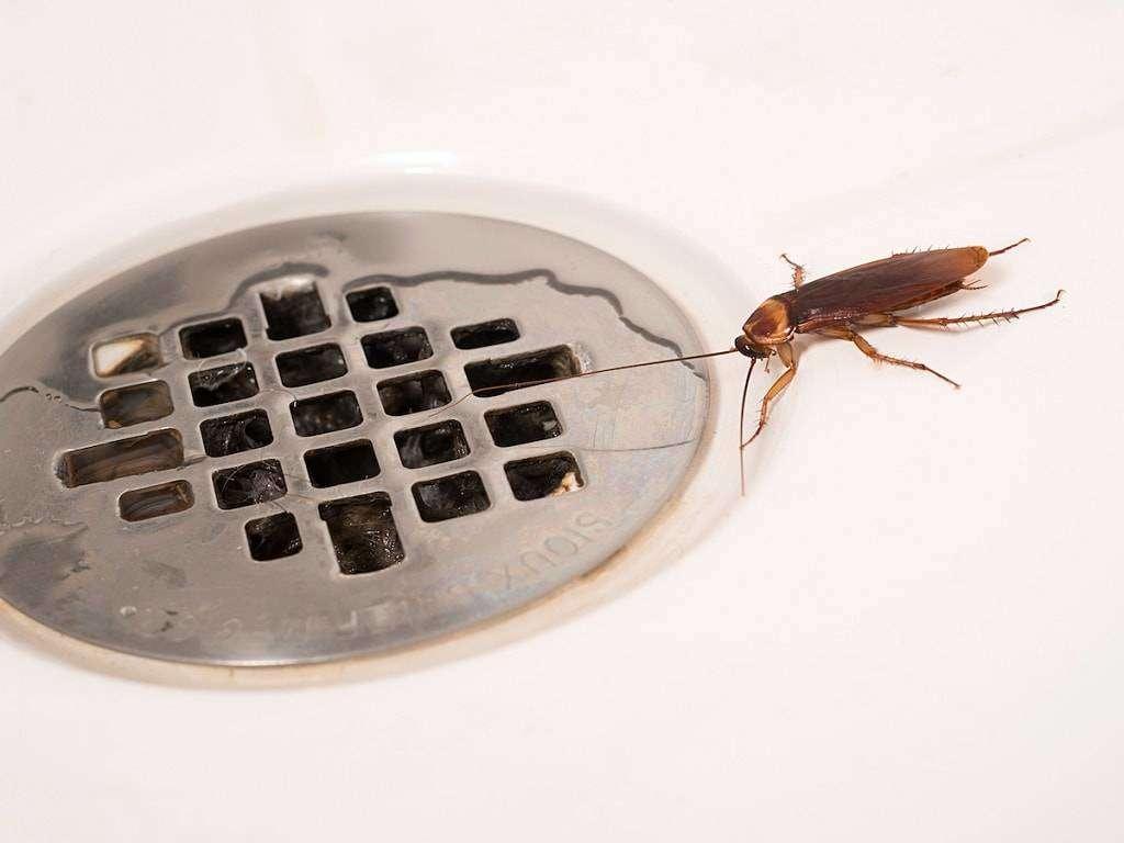 fumigacion-de-cucarachas